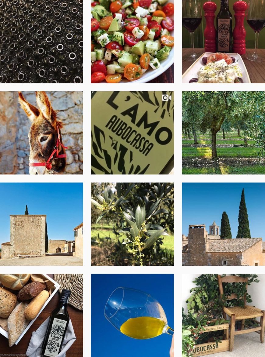 Aubocassa olive oil from Mallorca on Instagram